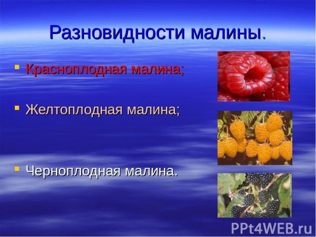 Разновидности малины. Красноплодная малина; Желтоплодная малина; Черноплодная малина.
