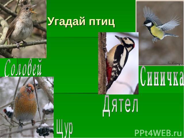 Угадай птиц