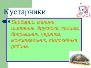 Кустарники Барбарис, малина, шиповник, брусника, калина, боярышник, черника, мож