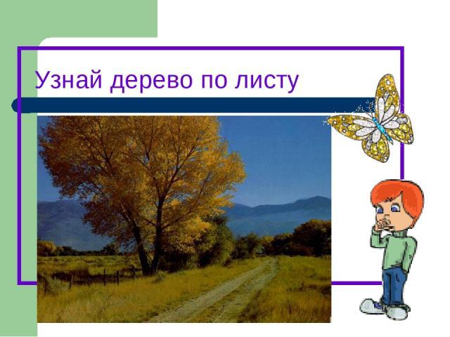 Узнай дерево по листу