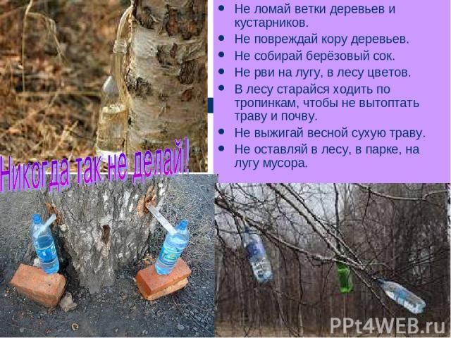 Не ломай ветки деревьев и кустарников. Не повреждай кору деревьев. Не собирай берёзовый сок. Не рви на лугу, в лесу цветов. В лесу старайся ходить по тропинкам, чтобы не вытоптать траву и почву. Не выжигай весной сухую траву. Не оставляй в лесу, в п…