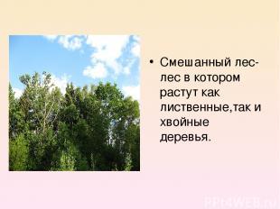Смешанный лес- лес в котором растут как лиственные,так и хвойные деревья.