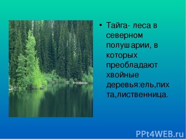 Тайга- леса в северном полушарии, в которых преобладают хвойные деревья:ель,пихта,лиственница.