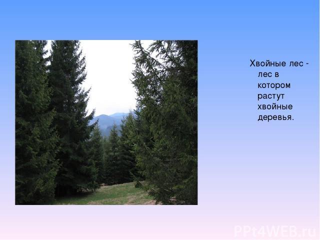 Хвойные лес - лес в котором растут хвойные деревья.