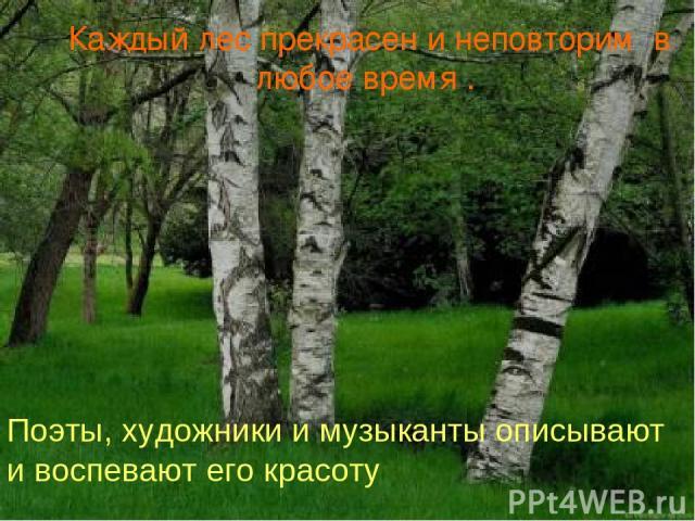 Каждый лес прекрасен и неповторим в любое время . Поэты, художники и музыканты описывают и воспевают его красоту