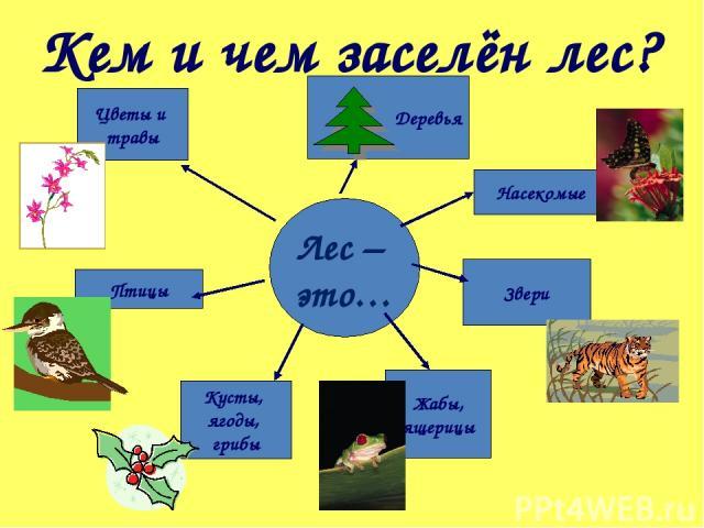 Лес – это… Кем и чем заселён лес? Цветы и травы Птицы Кусты, ягоды, грибы Жабы, ящерицы Звери Насекомые Деревья