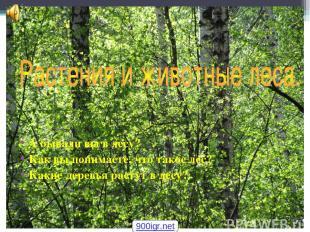 А бывали вы в лесу? Как вы понимаете, что такое лес? Какие деревья растут в лесу