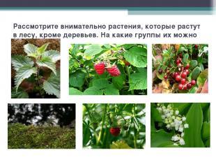 Рассмотрите внимательно растения, которые растут в лесу, кроме деревьев. На каки