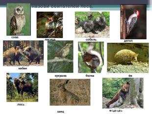 Узнай и назови обитателей леса. сова кабан лисица соболь кукушка лось заяц дятел