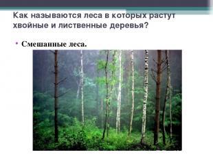 Как называются леса в которых растут хвойные и лиственные деревья? Смешанные лес