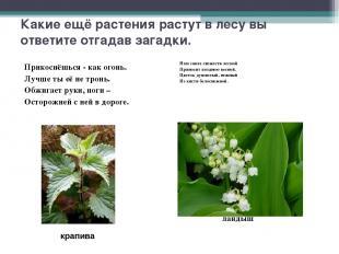 Какие ещё растения растут в лесу вы ответите отгадав загадки. Прикоснёшься - как
