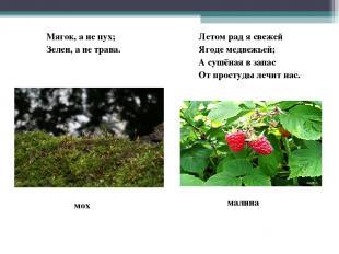 Мягок, а не пух; Зелен, а не трава. Летом рад я свежей Ягоде медвежьей; А сушёна