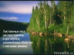 Лиственные леса распространены в достаточно увлажнённых областях с мягкими зимам