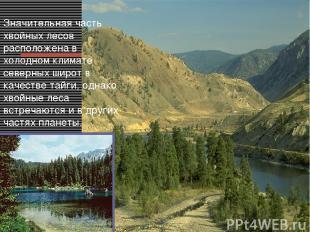 Значительная часть хвойных лесов расположена в холодном климате северных широт в