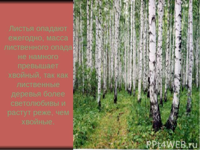 Листья опадают ежегодно, масса лиственного опада не намного превышает хвойный, так как лиственные деревья более светолюбивы и растут реже, чем хвойные.