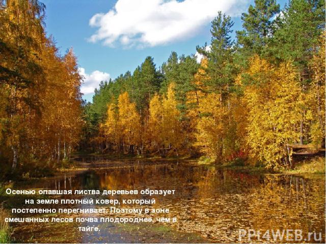 Осенью опавшая листва деревьев образует на земле плотный ковер, который постепенно перегнивает. Поэтому в зоне смешанных лесов почва плодороднее, чем в тайге.