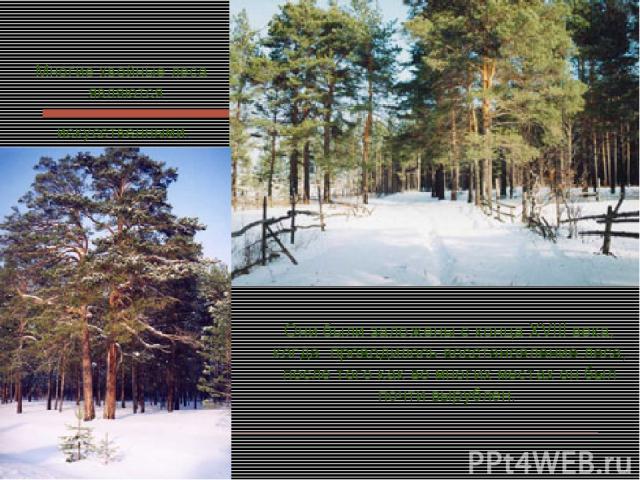 Многие хвойные леса являются искусственными. Они были заложены с конца XVIII века, когда проводилось восстановление леса, после того как во многих местах он был почти вырублен.