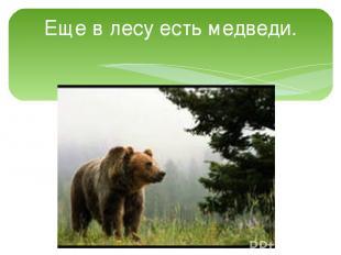 Еще в лесу есть медведи.