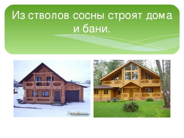 Из стволов сосны строят дома и бани.