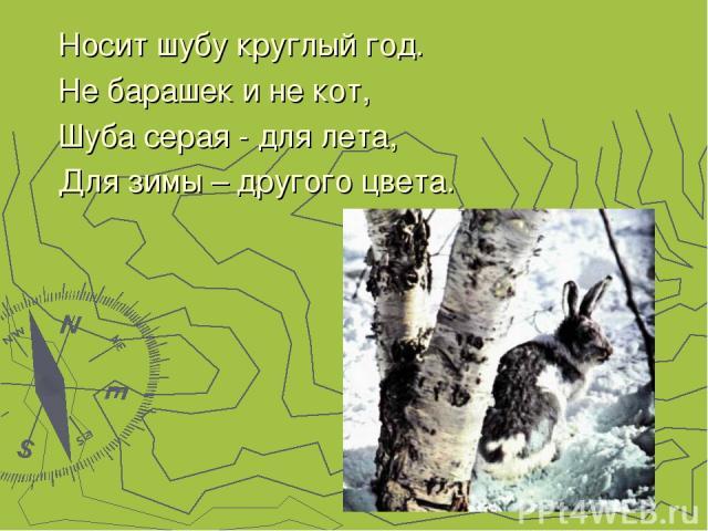 Носит шубу круглый год. Не барашек и не кот, Шуба серая - для лета, Для зимы – другого цвета.