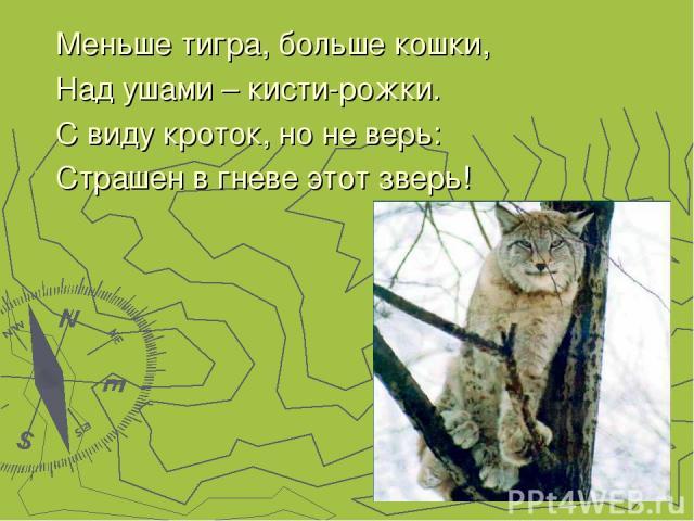 Меньше тигра, больше кошки, Над ушами – кисти-рожки. С виду кроток, но не верь: Страшен в гневе этот зверь!