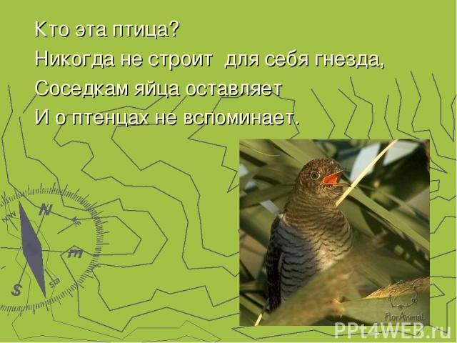 Кто эта птица? Никогда не строит для себя гнезда, Соседкам яйца оставляет И о птенцах не вспоминает.