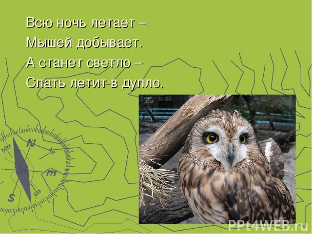 Всю ночь летает – Мышей добывает. А станет светло – Спать летит в дупло.