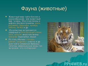 Фауна (животные) Животный мир тайги богаче и разнообразнее, чем животный мир тун