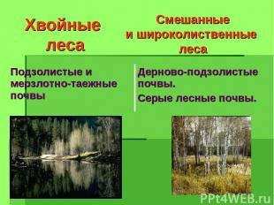 Хвойные леса Смешанные и широколиственные леса Подзолистые и мерзлотно-таежные п
