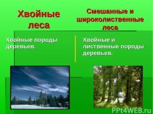 Хвойные леса Смешанные и широколиственные леса Хвойные породы деревьев. Хвойные