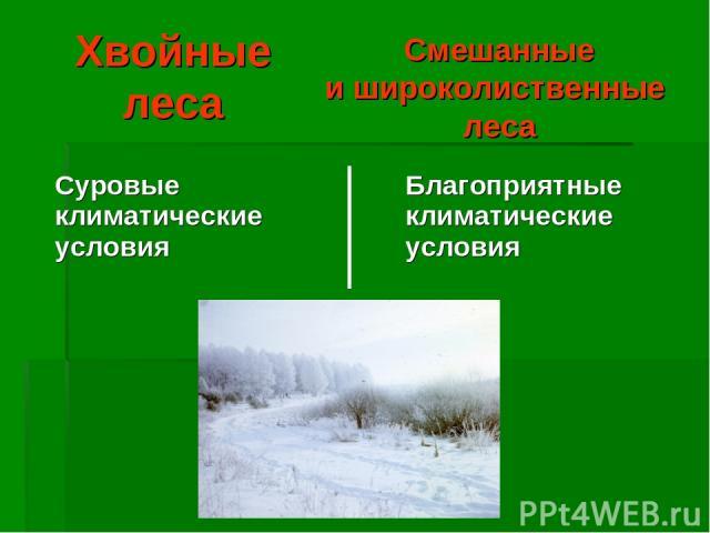 Хвойные леса Смешанные и широколиственные леса Суровые климатические условия Благоприятные климатические условия