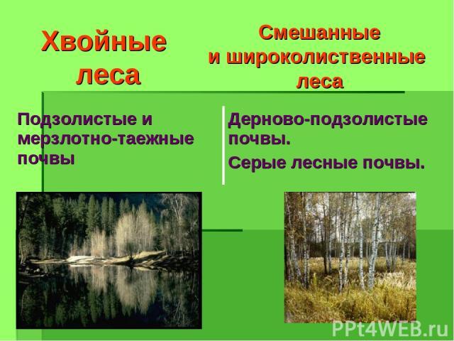 Хвойные леса Смешанные и широколиственные леса Подзолистые и мерзлотно-таежные почвы Дерново-подзолистые почвы. Серые лесные почвы.