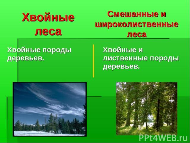 Хвойные леса Смешанные и широколиственные леса Хвойные породы деревьев. Хвойные и лиственные породы деревьев.