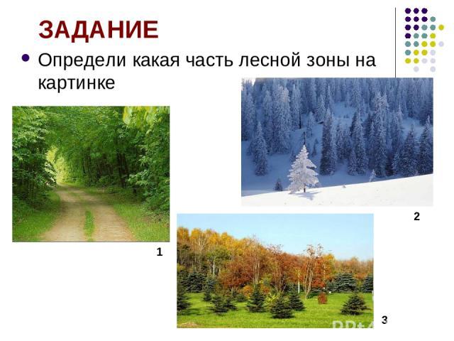ЗАДАНИЕ Определи какая часть лесной зоны на картинке 1 2 3