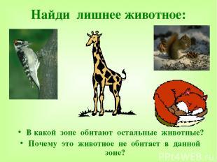 Найди лишнее животное: В какой зоне обитают остальные животные? Почему это живот