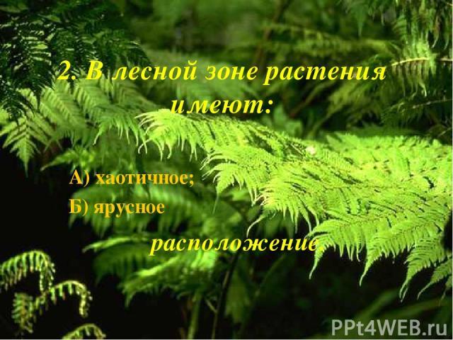 2. В лесной зоне растения имеют: А) хаотичное; Б) ярусное расположение.