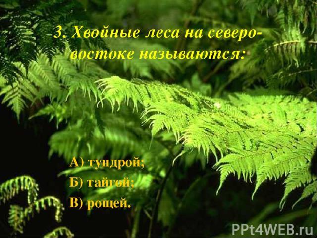 3. Хвойные леса на северо-востоке называются: А) тундрой; Б) тайгой; В) рощей.