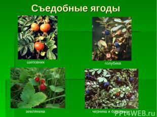 Съедобные ягоды шиповник голубика земляника черника и брусника