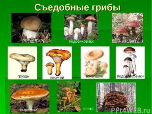 Съедобные грибы белый гриб подосиновики маслята груздь лисички волнушки подберёз