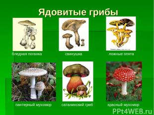 Ядовитые грибы бледная поганка свинушка ложные опята пантерный мухомор сатанинск