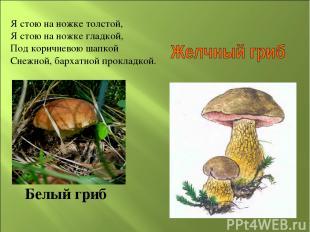 Белый гриб Я стою на ножке толстой, Я стою на ножке гладкой, Под коричневою шапк