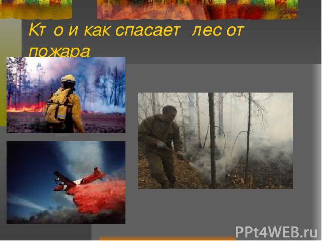 Кто и как спасает лес от пожара