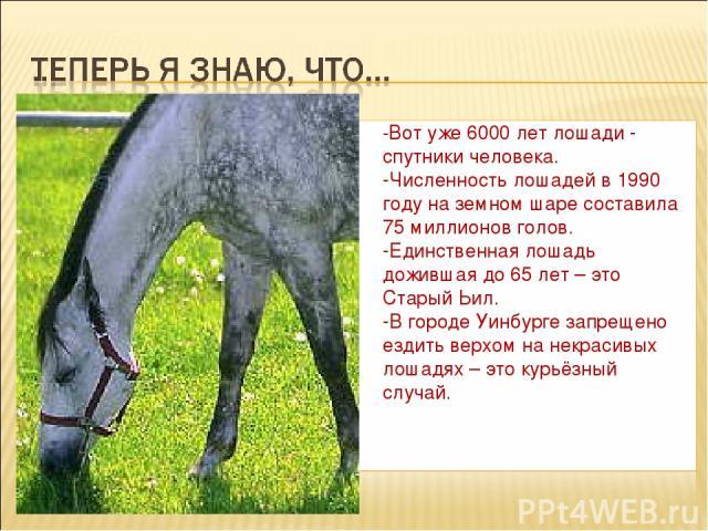 -Вот уже 6000 лет лошади - спутники человека. -Численность лошадей в 1990 году на земном шаре составила 75 миллионов голов. -Единственная лошадь дожившая до 65 лет – это Старый Ьил. -В городе Уинбурге запрещено ездить верхом на некрасивых лошадях – …