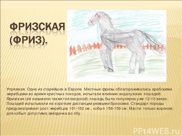 Упряжная. Одна из старейших в Европе. Местные фризы облагораживались арабскими жеребцами во время крестных походов, испытали влияние андалузских лошадей. Фризская (её называли также голландской) лошадь была популярна уже 12-13 веках. Лошадей испытыв…