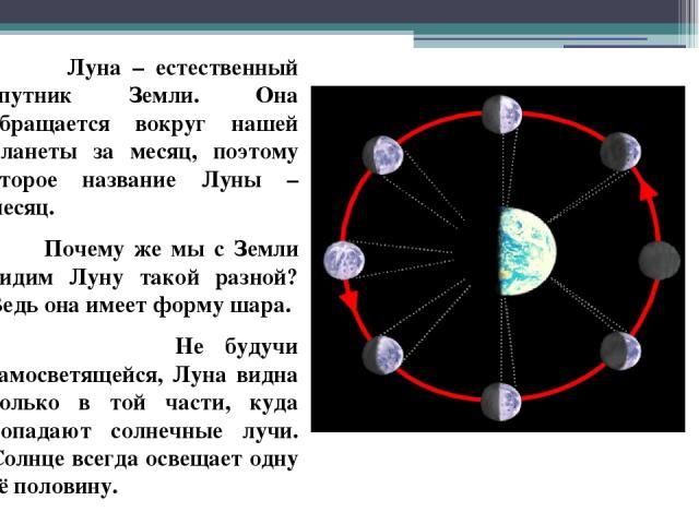 Луна – естественный спутник Земли. Она обращается вокруг нашей планеты за месяц, поэтому второе название Луны – месяц. Почему же мы с Земли видим Луну такой разной? Ведь она имеет форму шара. Не будучи самосветящейся, Луна видна только в той части, …