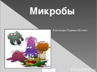 Микробы Александра Руднева 3В класс 5klass.net