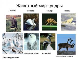 Животный мир тундры кречет лебеди комар песец белая куропатка полярная сова севе