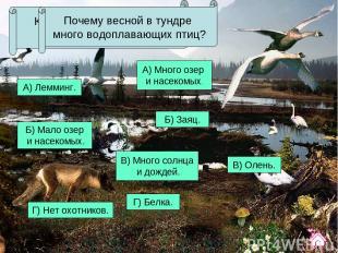 А) Лемминг. Б) Заяц. В) Олень. Г) Белка. Какое из этих животных не обитает в тун