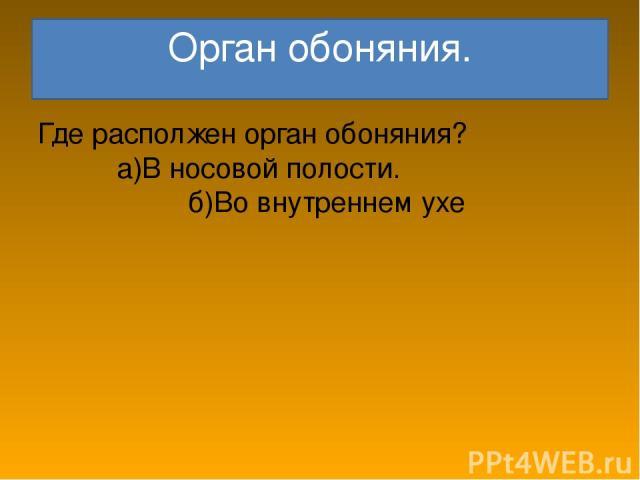 Орган обоняния. Где располжен орган обоняния? а)В носовой полости. б)Во внутреннем ухе