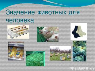 Значение животных для человека